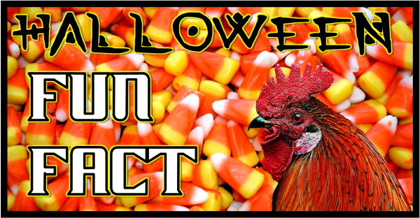 HALLOWEEN FUN FACT #1 candy corn and rooster